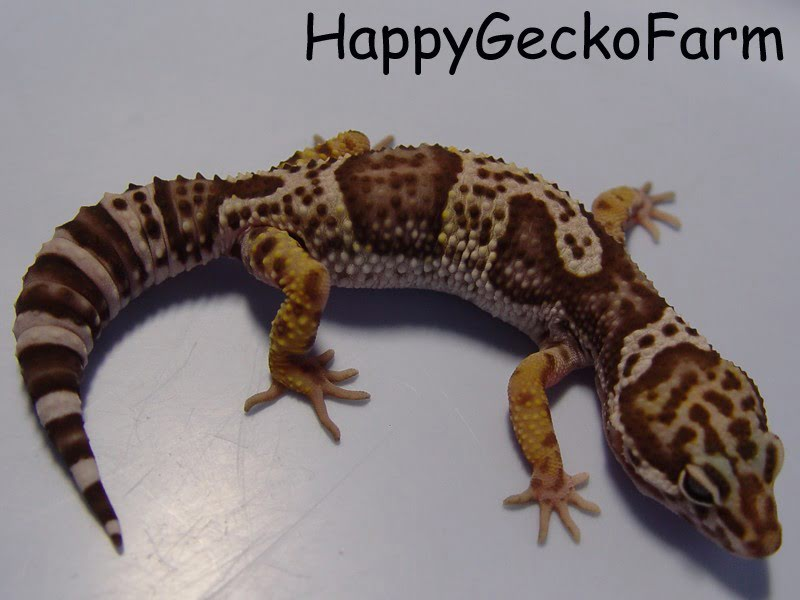 mack_snow_tremper_albino