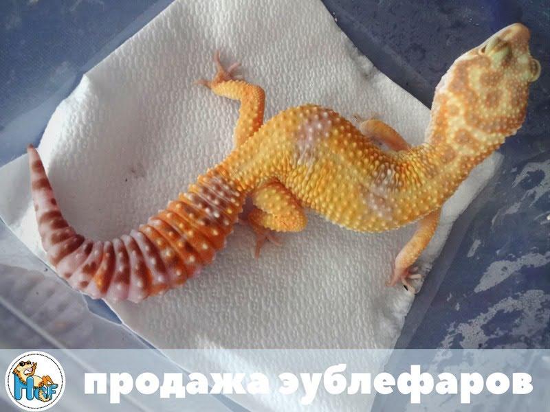 Tremper Albino