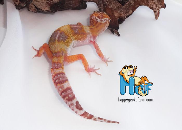 Hypo Mack Snow Tangerine TA