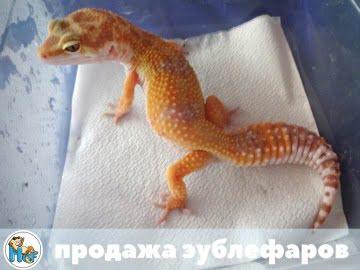RAPTOR Snake Eyes Image 1