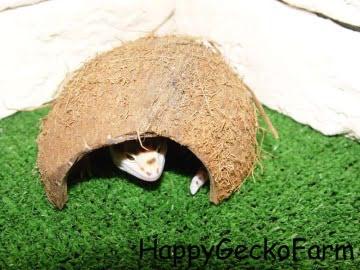 Укрытие для рептилий из кокоса Image 2