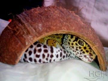 Укрытие для рептилий из кокоса Image 1