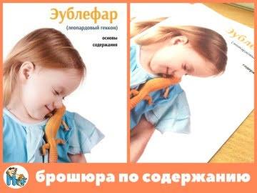 Брошюра по содержанию эублефара Image 0