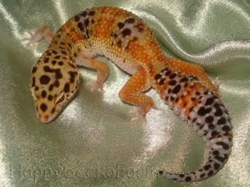 Tangerine Image 3