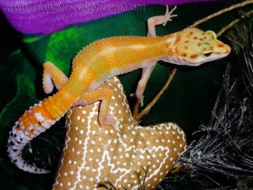 Tangerine poss Emerald Image 2