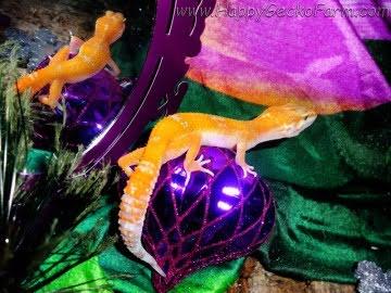 Sunglow poss Electric Image 2