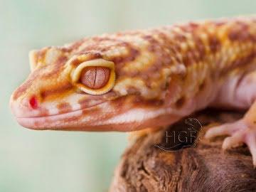 Bell Albino Image 1