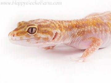 Tremper Albino Image 1
