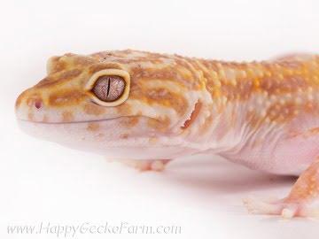 Tremper Albino Image 0