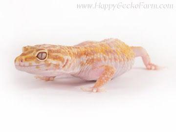 Tremper Albino Image 2