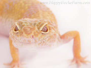 Tremper Albino Pastel Image 0