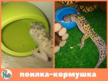 Поилка кормушка для рептилий Image 1