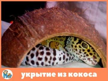 Укрытие для рептилий из кокоса Image 0