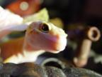 Ящерка` аватар